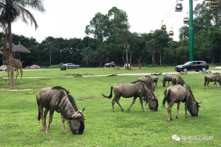 长隆双飞仅2688元/人起:广州长隆动物世界、大马戏、珠海海洋王国(多次)双飞四日游